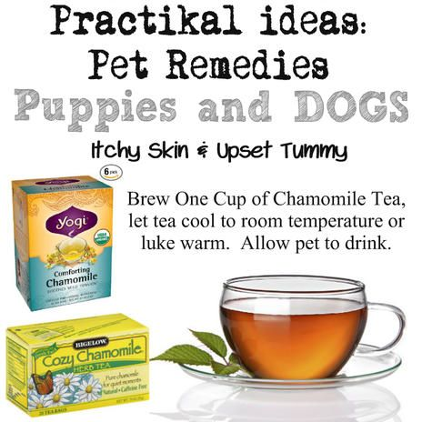 Natural Remedies For My Dogs Tummy