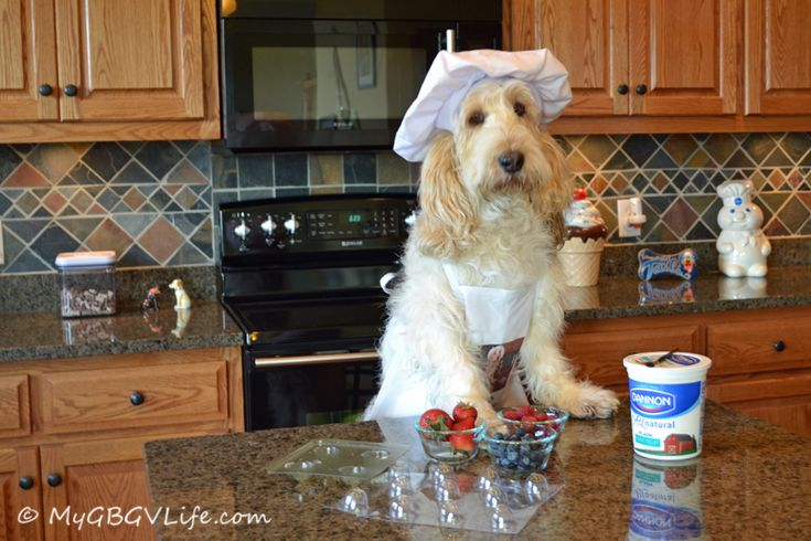 This is the final week of K9 Kamp! Not only has the fitness regime heated up, but the summer temperatures have too. Since there is nothing better than a refreshing snack after exercising I decided to post these healthy yet tasty K9 Kamper Snacks. The basic recipe is nothing new, just the form to make …