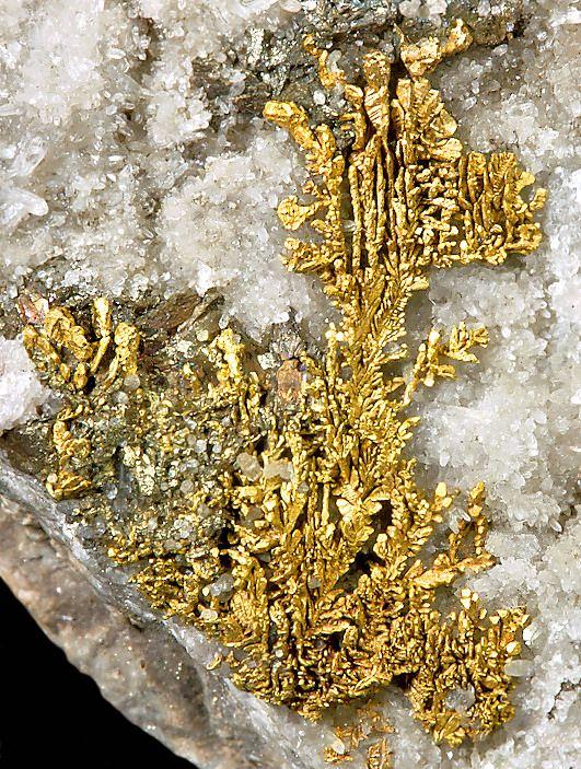 Native Gold dendrites on Quartz crystal matrix. From Rosia Montana, Verespatak, Alba County, Romania