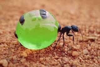 https://lglive.ru/vybiraem-domashnego-pitomca-muravi/ Когда люди решают завести домашних животных, то перед ними иногда встает нелегкий выбор. Кого же выбрать? Кошку, собаку, крысу, рыбок? Некоторые люди решаются на экзотических питомцев. Таких, как крокодил, обезьяна или питон… Но здесь я хочу рассказать о маленьких безобидных насекомых — муравьях. Оказывается их... https://lglive.ru/vybiraem-domashnego-pitomca-muravi/