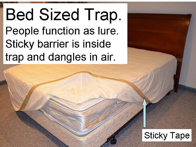 Stop Bed Bug Bites Immediately Good Ideas Bed Bug