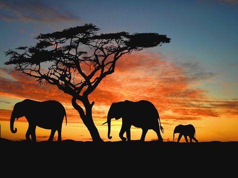 Familia de elefantes al anochecer