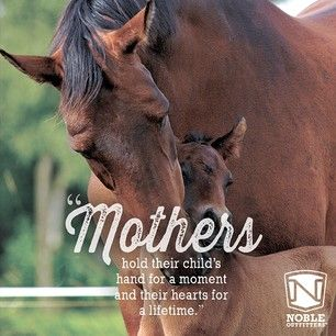 Happy Mother's Day to all you super moms,  horse show moms, and moms of furry kids!