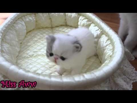 Cute Little Kitten Sneezes - http://funnypetvideos.net/cute-little-kitten-sneezes/