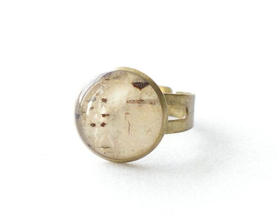 Birch bark beige with brown ring - woodland resin beige tree - Betula pubescens