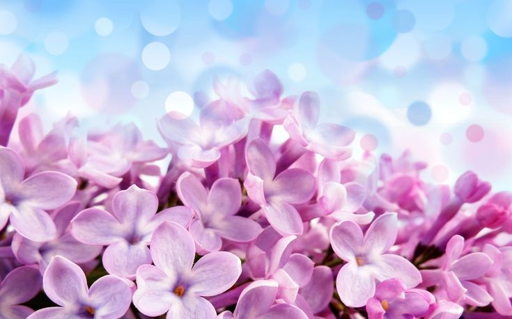 23 Free Flower Wallpapers To Brighten Your Day Flower Wallpaper Free Flower Wallpaper Lilac Wallpapers Best lilac flowers hd wallpapers free