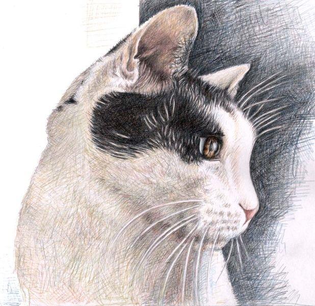 Cats View - Katzenblick von Arts & Dogs by Nicole Zeug auf DaWanda.com