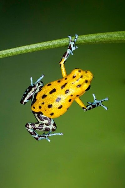 So colorful and yet a poisonous frog