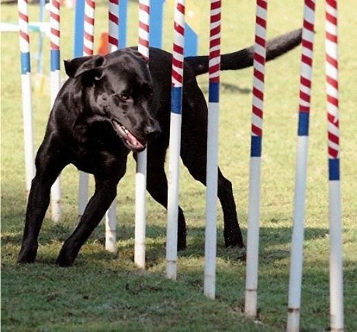 Dog Agility Training Myrtle Beach Sc