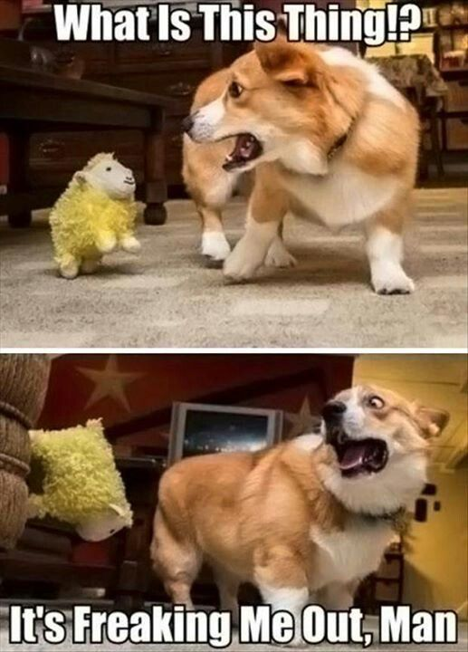 :-) cannot stop laughing, my dog is the same way!