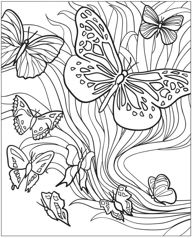 creative haven beautiful butterflies designs with a splash of color coloring sheets - Coloring Pages Butterfly