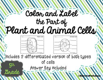 Best 20+ Plant cell labeled ideas on Pinterest