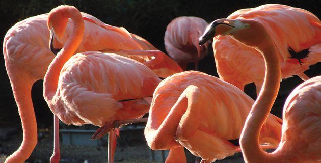 visitar los flamencos rosados en Ria Celestun