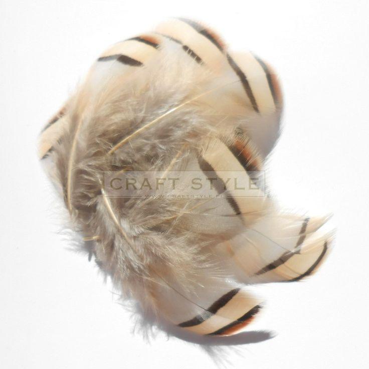 kuropatwa himalajska pióra 10szt