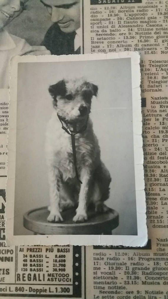 Little terrier strikes a pose. Take a look at it in my etsy shop! Guarda questo articolo nel mio negozio Etsy https://www.etsy.com/it/listing/528246618/little-terrier-strikes-a-pose