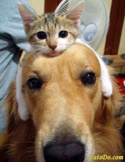 "Somebody's comment said, ""I got my thinking cat on."" hilarious.Hats, Random Funny, Cat, Funny Dogs, Best Friends, So Cute, Funny Pictures, Pets, Funny Animal"