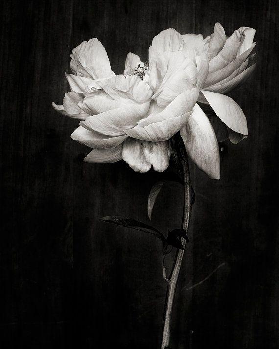 Botanical Black and White No. 5821