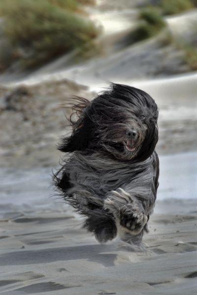 GAAF toch zo'n rennende does, geweldig, love it!