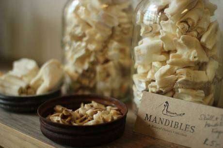Mandibles - a natural history collection - B-Guided