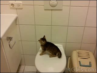 This kitten who had dreams of jumping high. | 28 Cats Having A Way Worse Day Than You