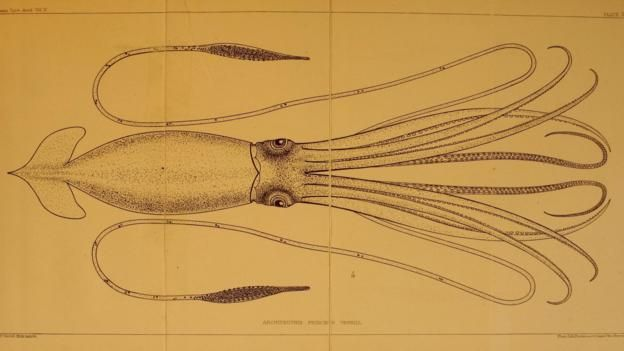 New species were frequently 'discovered' (Credit: Biodiversity Heritage Library / CC 2.0)