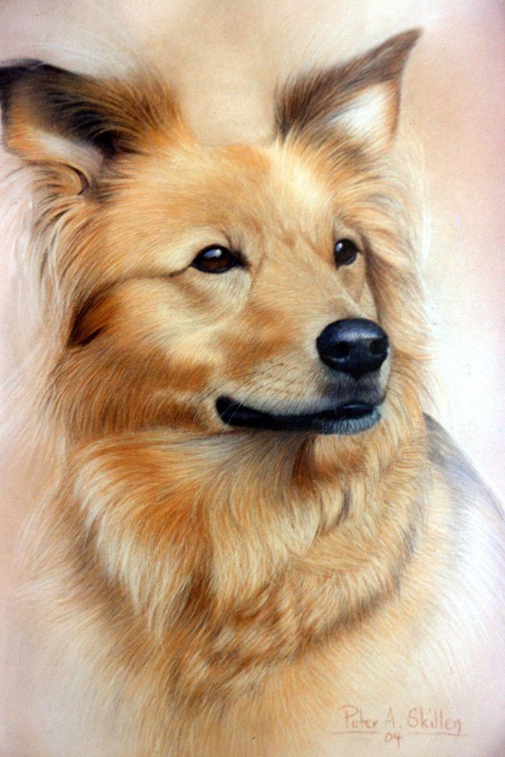 Collie Cross...Pastel Art by Peter Skillen