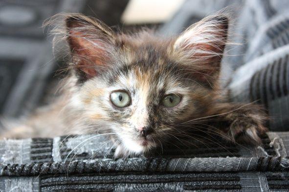 Volunteer - Vancouver Orphan Kitten Rescue Association (VOKRA)