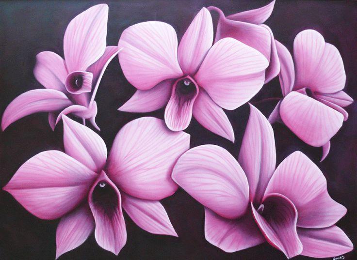 cooktownorchids.png (740×540)