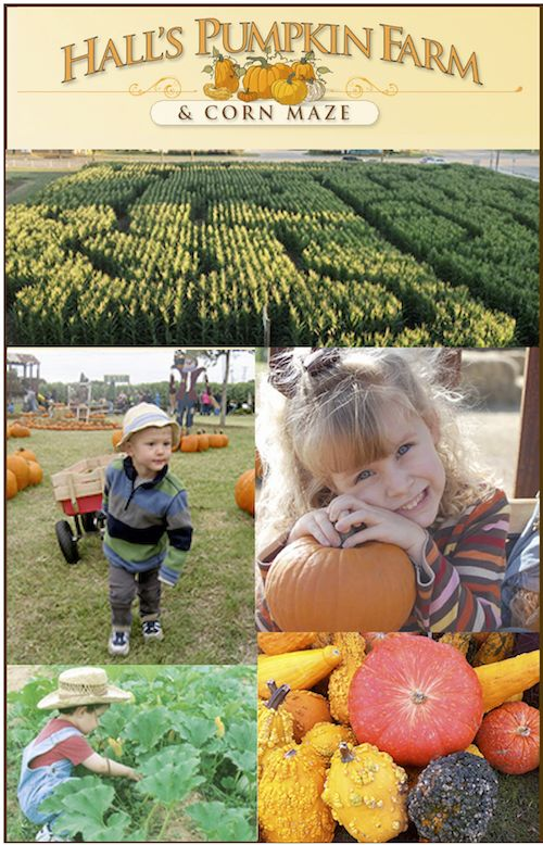 Halls Pumpkin Farm - Family eGuide - Pumpkin Patch, Pumpkin Patches, Grapevine TX, Flower Mound, Southlake, Halloween, Fall Activities, Special Events, DFW, Dallas, Fort Worth