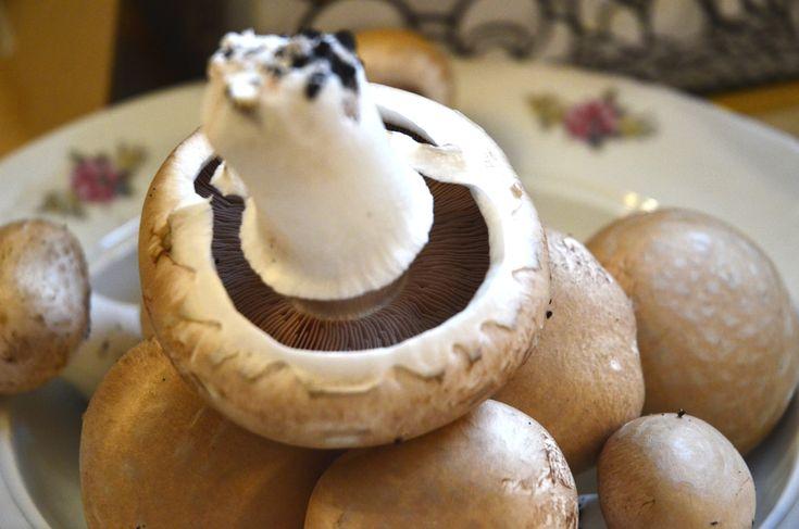 Cultivarea acasa a ciupercilor Champignon
