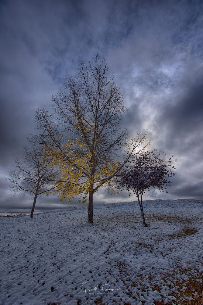Last Leaves (Saskatchewan) by Ian McGregor on 500px