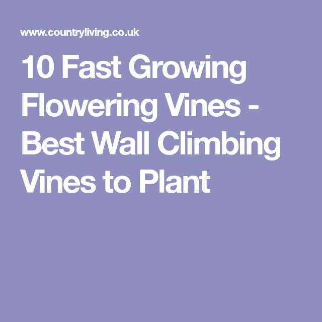 10 Fast Growing Flowering Vines - Best Wall Climbing Vines to Plant