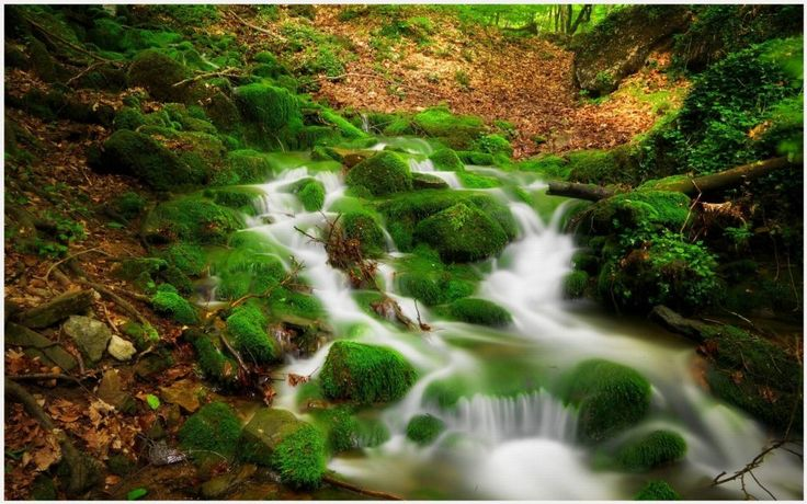 Forest River Water Stream Scenery Wallpaper   forest river water stream scenery wallpaper 1080p, forest river water stream scenery wallpaper desktop, forest river water stream scenery wallpaper hd, forest river water stream scenery wallpaper iphone