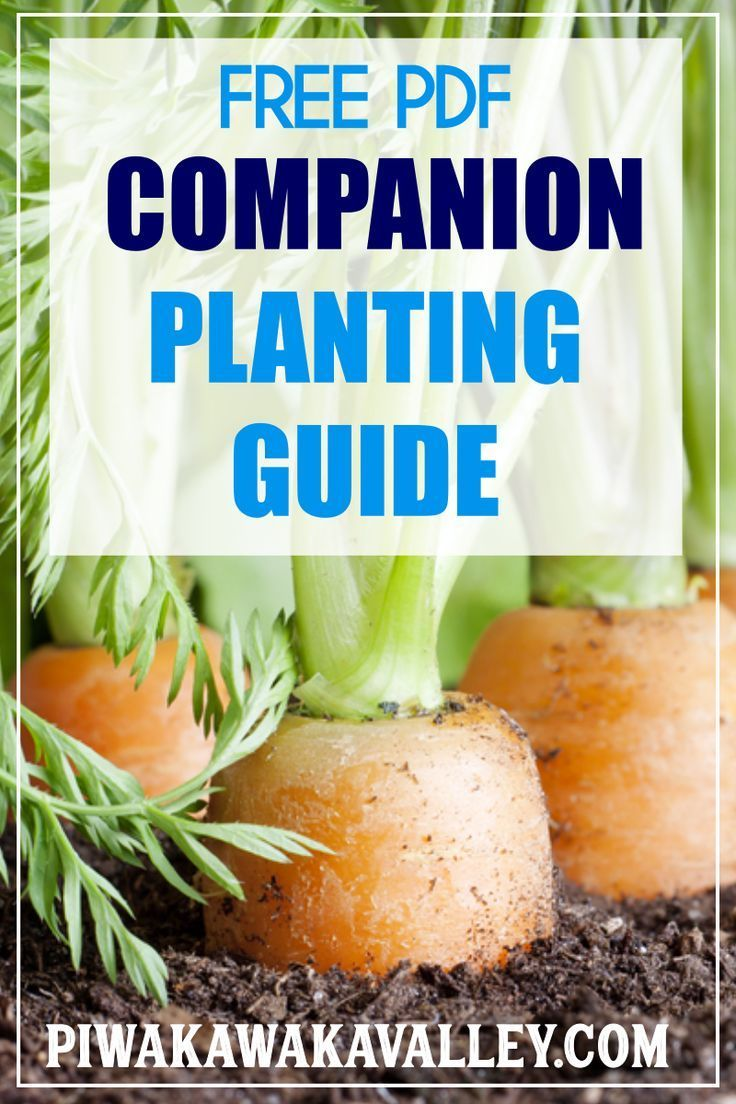 Companion Planting Chart For Vegetables And Herbs Companion