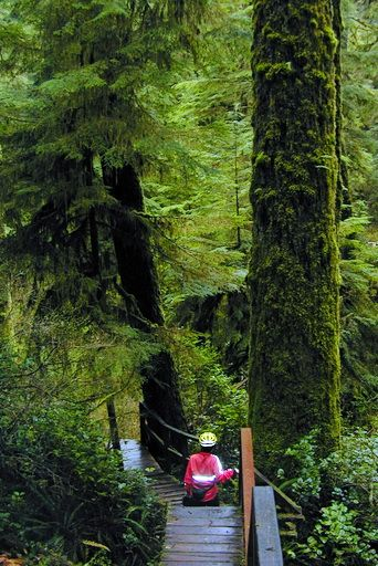 Simple hike on Rainforest Trail, near Tofino, Vancouver Island
