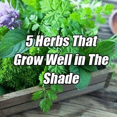 5 Herbs That Grow Well in The Shade