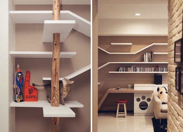 Living Space Dedicated To Cats