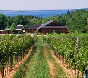 Jost Vineyards is situated on over 100 acres on Nova Scotia's beautiful Sunrise Trail. With the largest and longest operating winery in the Atlantic region, the Jost family pioneered the industry, supporting the majority of today's independent vineyard operations. Their legacy of wine making dates back 400 years to Germany read more