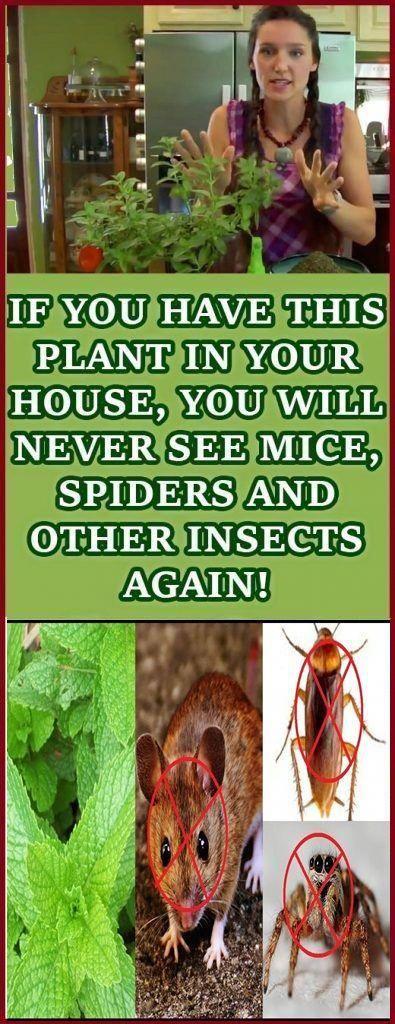 pestcontrolservices,rodentcontrol,domyownpestcontrol
