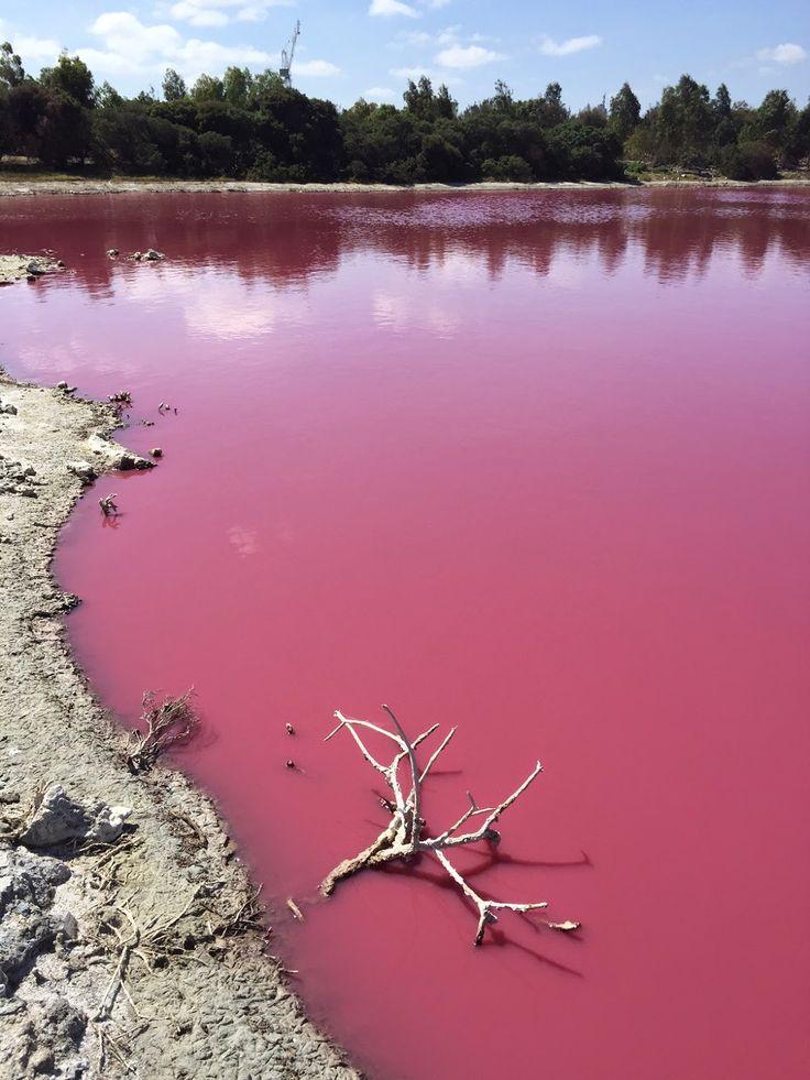 Westgate Park pink lake in Melbourne