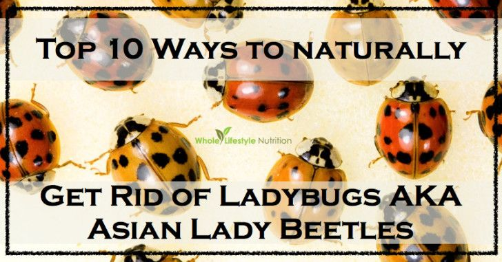 Natural Ways To Get Rid Of Ladybugs In Your House