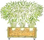 Portable potted bamboo screen how-to.  Forget lattice screens - I want bamboo!