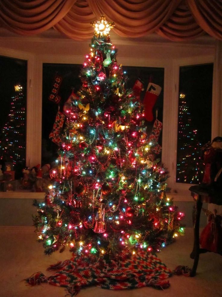 28 best holiday lights images on pinterest holiday for Small decorated christmas trees