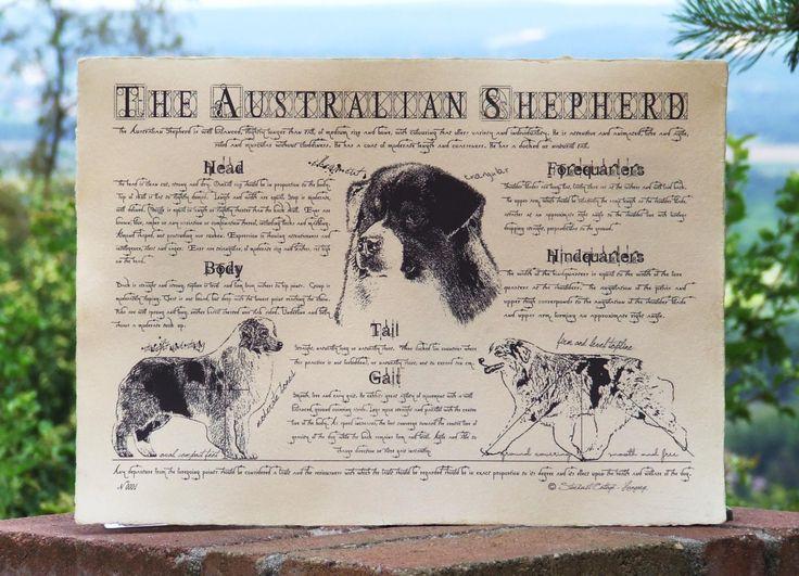Antique styled dog standard - Australian Shepherd by Creativedoglover on Etsy