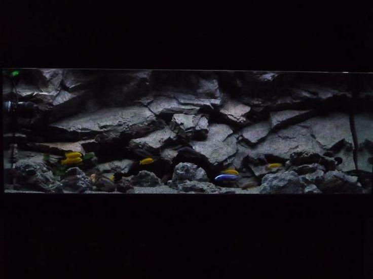 17 best images about aquarium on pinterest haunted