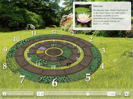 Blumenuhr  Der schwedische Botaniker Carl von Linné hat im 18. Jahrhundert eine besondere Art der Zeitmessung kreiert: die sogenannte Blumenuhr. Dafür pflanzte er ein kreisförmiges Beet mit verschiedenen Blumen an, deren Blüten sich zu bestimmten Zeiten öffnen. Wie das genau funktioniert, kann man in der interaktiven Blumenuhr erkunden.