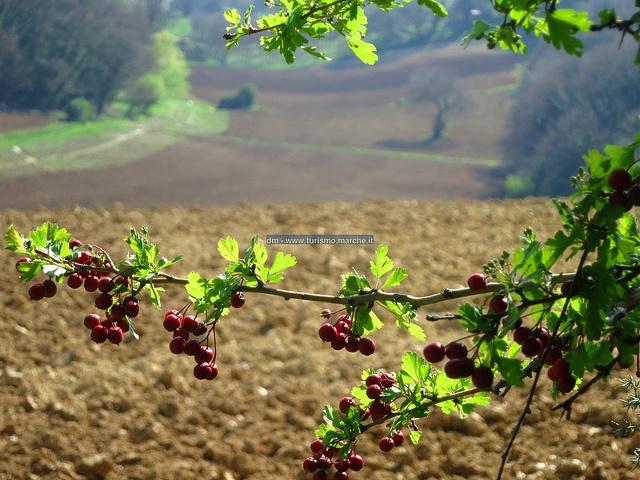 Parco Naturale Regionale Monte San Bartolo (PU) - Marche, Italy