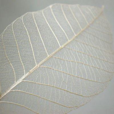 暖かい季節が来て植物も育つ季節がやってきましたが、そんな木々の緑を使ってスケルトンリーフを作ることができます。このスケルトンリーフ額に飾ったり貼り付けたりすることで素敵な雑貨やインテリアになるんですよ♪