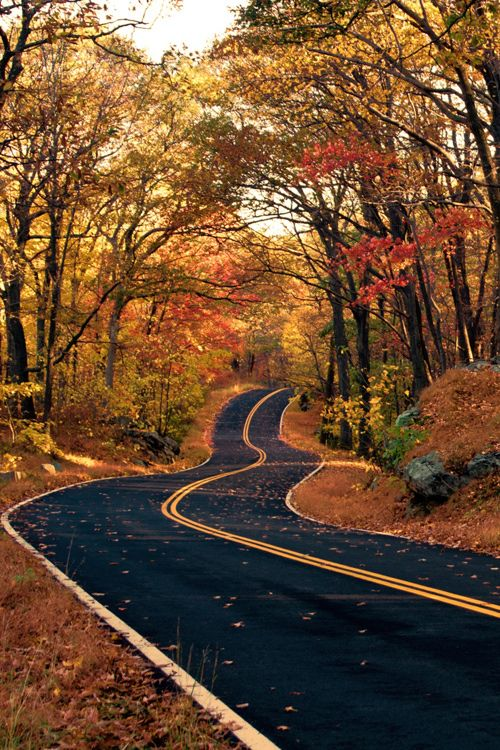 The Long And Winding Road ~ An autumn road in Harriman State Park, NY