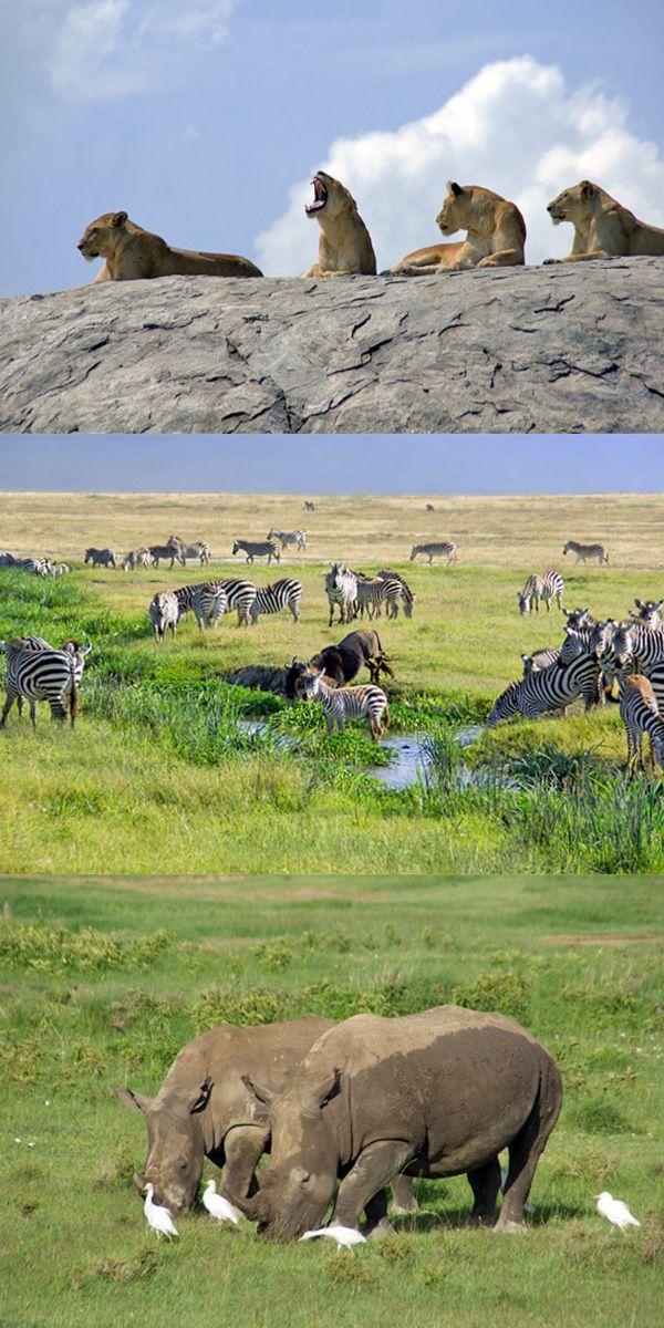 Afrika - Ein atemberaubender Kontinent! Begleite uns auf eine Fotoreise durch Afrika. Zusätzlich gibt es noch ein paar Tipps zum Fotografieren vor Ort!  #Afrika #Wildlife #Tiere #Fotografie #Tipps #BilderDE